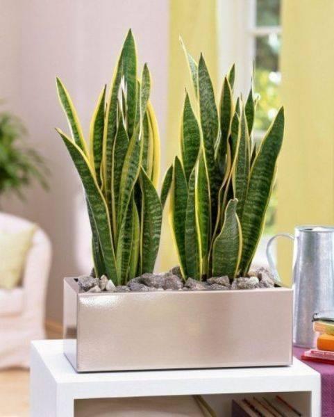 Самые теневыносливые домашние растения: список, фото и описание