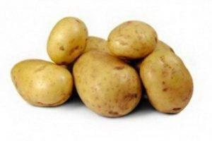 Картофель метеор: характеристика и описание сорта, выращивание и уход