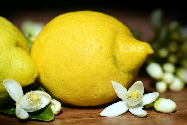 К чему снится лимон. видеть во сне лимон - сонник дома солнца