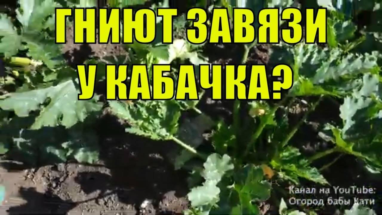 Гниют кабачки на кусту в открытом грунте: что делать