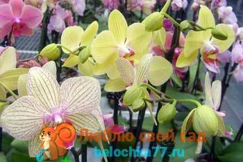 Редкие цветы или каких цветов можно встретить орхидеи?