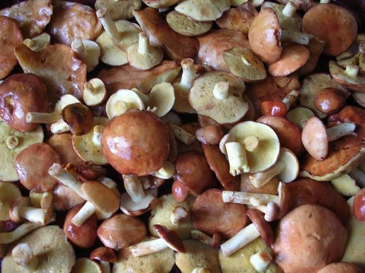 Нужно ли чистить белые грибы