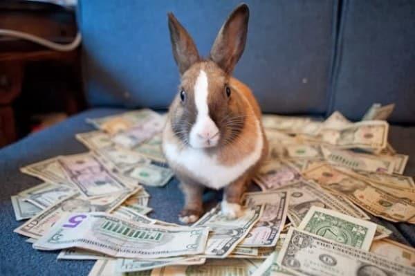 Бизнес план по разведению кроликов