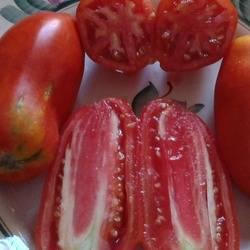 Перцевидные томаты   tomatland.ru