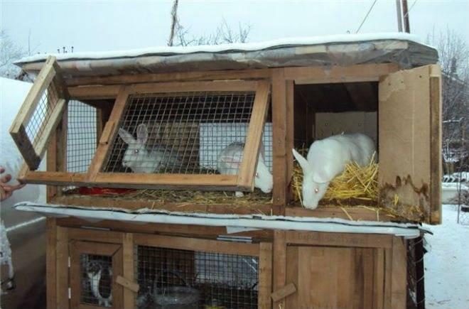 Содержание кроликов зимой на улице и в домашних условиях