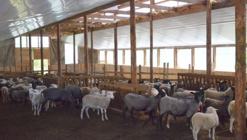 Овчарня для овец: строительство своими руками