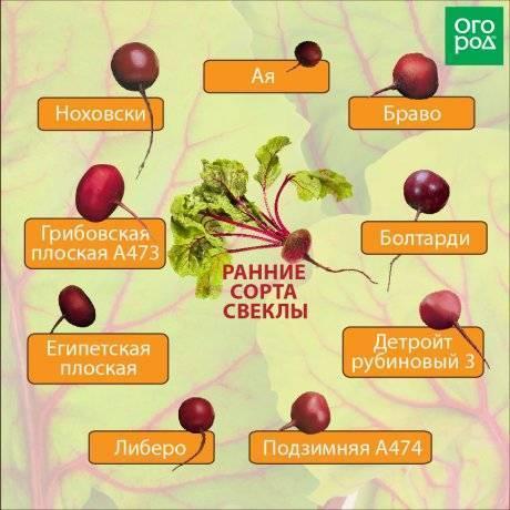 Сорта алычи: 15 лучших для средней полосы россии