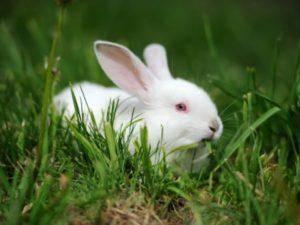 Как сильно кусают кролики