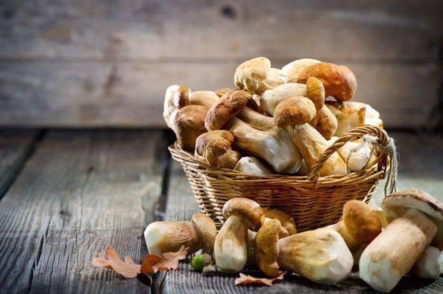 Грибы татарстана 2021: когда и где собирать, сезоны и грибные места