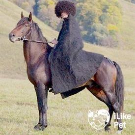 Карачаевская порода лошадей: особенности и история ценной породы коней кавказских гор