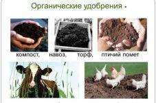Органические удобрения: виды и почему их считают наиболее ценными