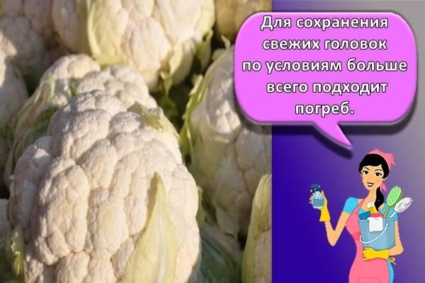 Основные правила хранения цветной капусты и как правильно заморозить кочаны? практические рекомендации