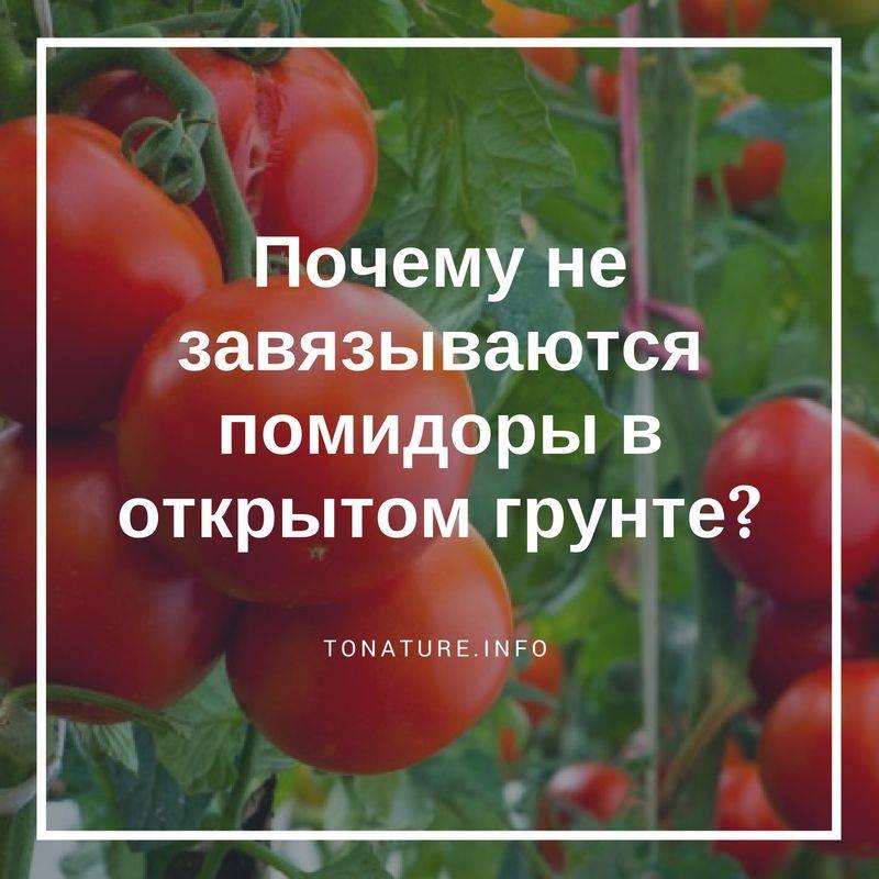 Почему нет завязи у помидоров