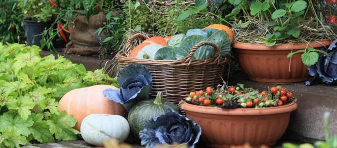 Калий сернокислый удобрение применение на огороде, фото и видео