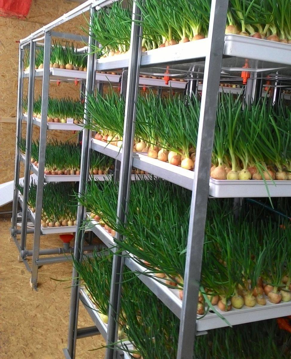 Гидропоника: основные методы испособы выращивания огородных культур дома. гидропоника — что это и зачем применяется