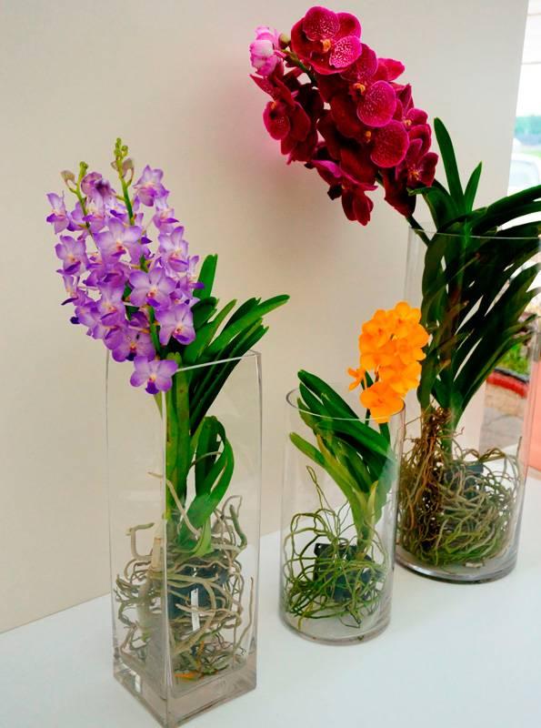 Орхидея ванда уход в домашних условиях выращивание в стеклянной колбе размножение фото и видео