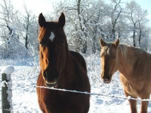Клички для лошадей: подбираем красивые имена кобылам и жеребцам