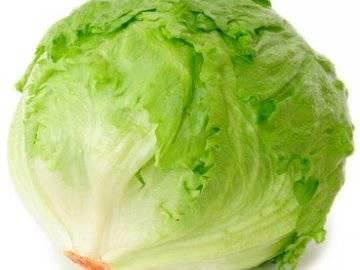 Самый популярный сорта салата в мире — выращиваем айсберг! — agroxxi