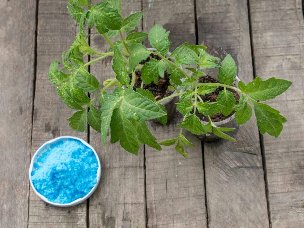 Медный купорос: применение в садоводстве, обработка весной, осенью