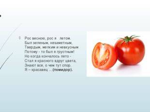Мнение ботаников о том, чем является помидор — овощем, фруктом или ягодой