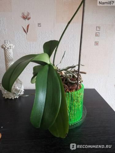 Горшок для орхидеи: 3 основных правила выбора