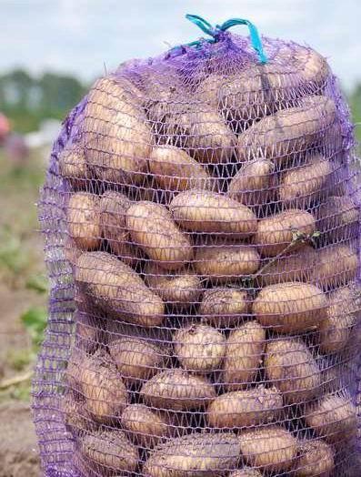 Картофель колетте: характеристика и описание сорта, отзывы садоводов с фото