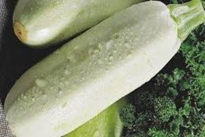 Правила обрывания листьев у кабачков