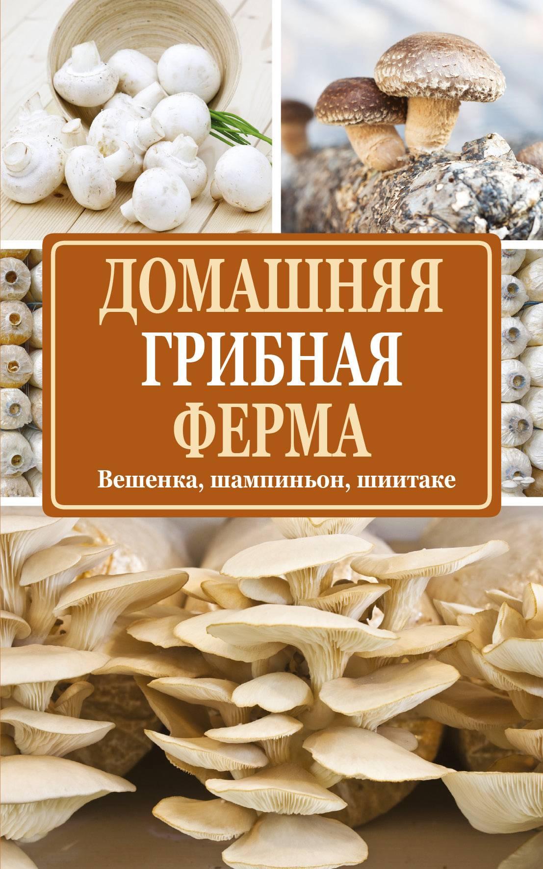 Готовый бизнес-план по выращиванию и продаже грибов — актуальность бизнеса, обзор рынка сбыта, возможные риски и гарантии