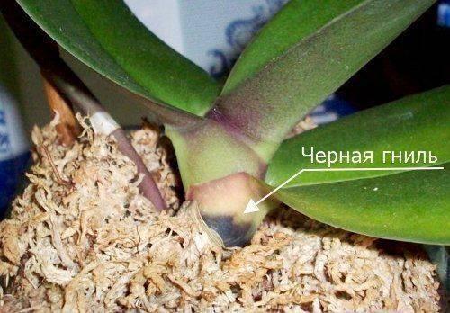 Болезни орхидей, их лечение и фото листьев, пораженных недугами, а также информация об их профилактике selo.guru — интернет портал о сельском хозяйстве