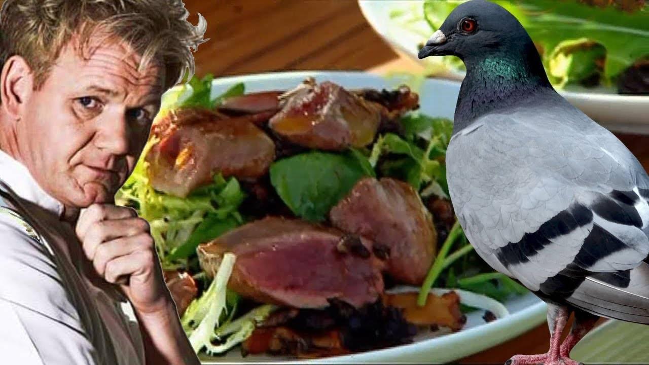 Особенности разведения и содержания голубей