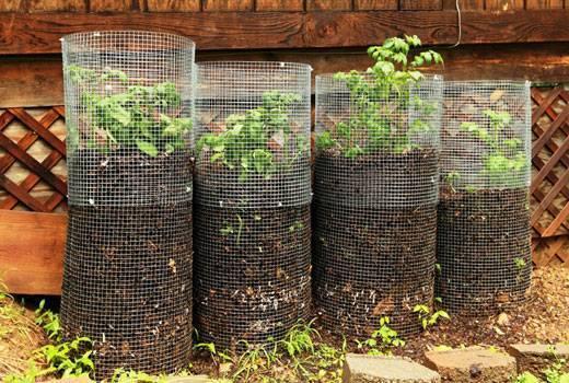 Картошка в мешке: пошаговая инструкция по выращиванию, видео