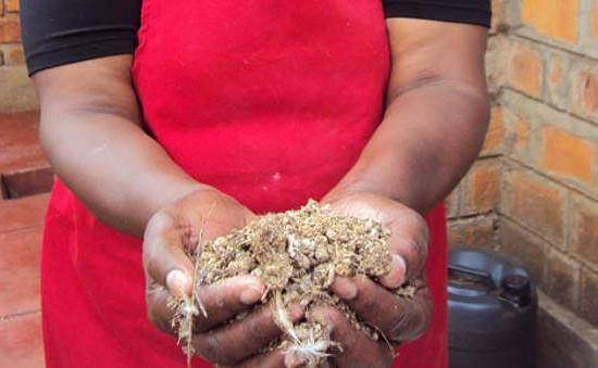 Перепелиный помет как удобрение — выгодные отходы птицеводства
