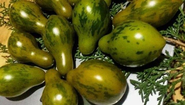 Томат агата — высокоурожайный сорт, дающий до 4 кг плодов с куста