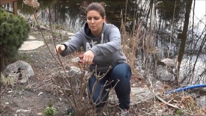 Как размножить гортензию черенками осенью: пошаговая инструкция с фото и видео