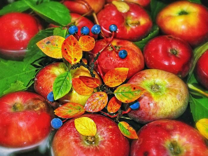 12 интересных фактов о яблоках, которые вы вряд ли слышали: каким было запретное яблоко в эдемском саду, и почему этот фрукт стал логотипом крупнейшей корпорации мира