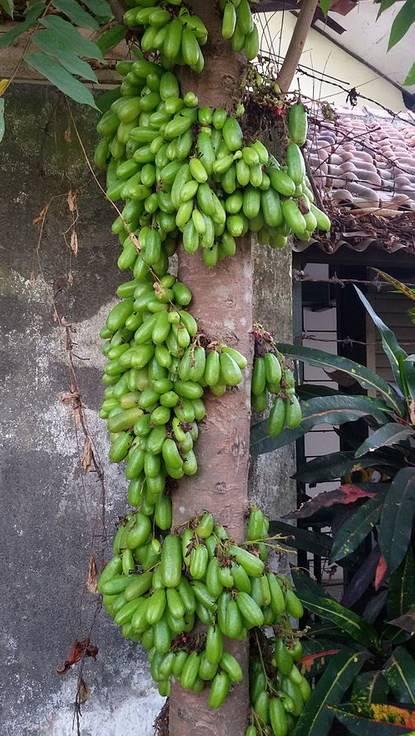Билимби (огуречное дерево) - вкусняха