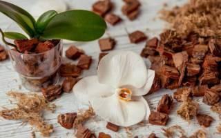 Кора для орхидей: какая нужна и как подготовить своими руками