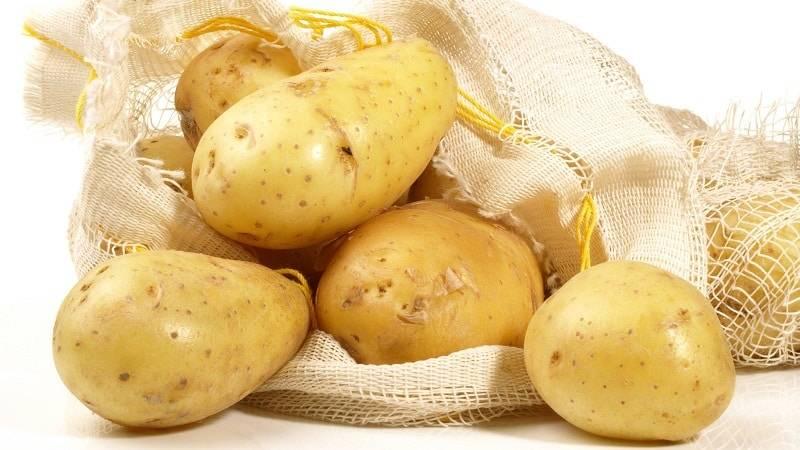 Отличительные характеристики сорта картофеля зекура и особенности его выращивания