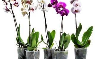 Правильный уход за орхидеями для новичков