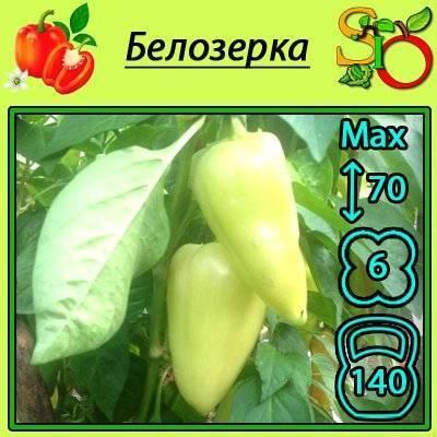 Лучшие сорта сладкого перца для открытого грунта: обзор видов, советы по выбору сорта болгарского перца, отзывы