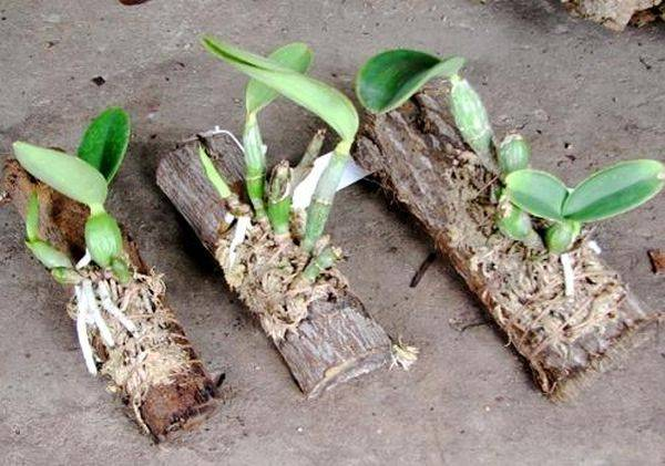 Какой грунт подходит для орхидей