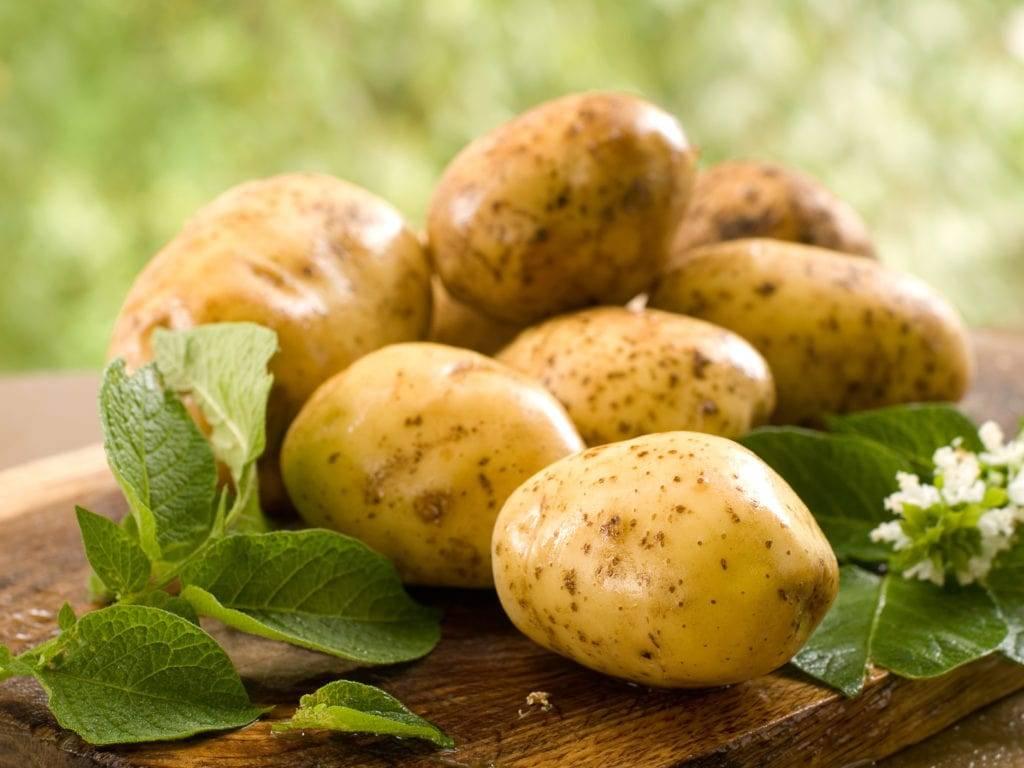 14 удобрений, которые лучше всего вносить под картофель