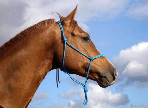 Виды уздечек для лошадей: сайд-пул и кук, устройство, фото и видео