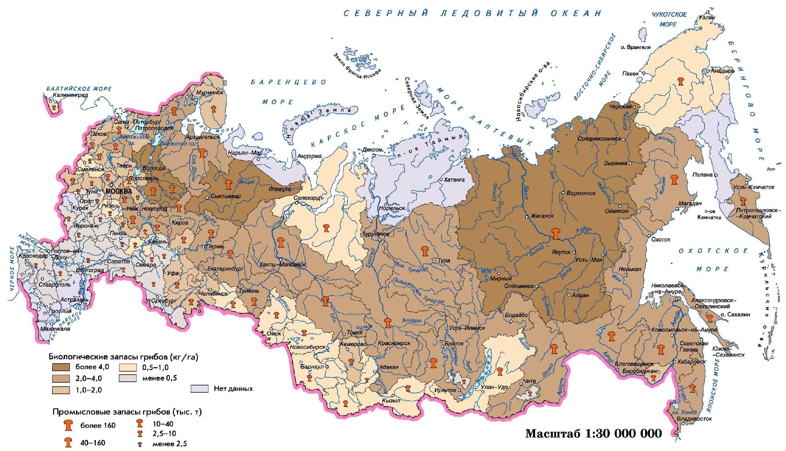 Грибы вологодской области в 2020 году: лучшие места и сезон сбора