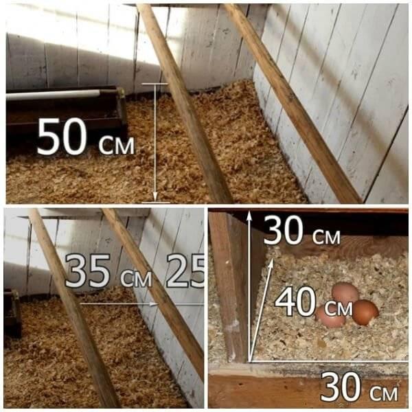 Как построить курятник на 50 или 200 кур: инструкция, чертежи и видео