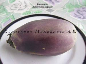 Баклажан японский карлик фото. баклажаны японский карлик: описание и особенности выращивания сорта