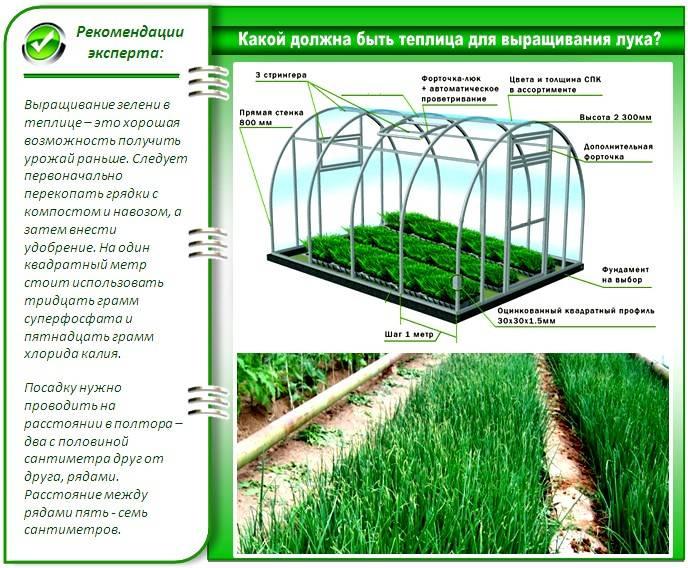 Выращивание зеленого лука в воде: подготовка к выгонке, секреты и хитрости