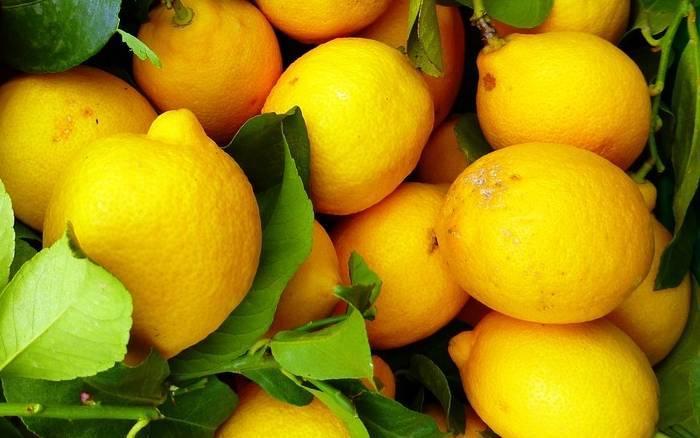 Мед и сок лимона при атеросклерозе