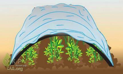 Агроволокно — какое бывает и как выбрать нужное