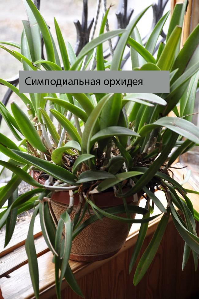 6 способов размножить орхидеи в домашних условиях